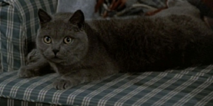 """Pet Sematary Remake Apparently """"10 Times Scarier"""" Than the Original"""