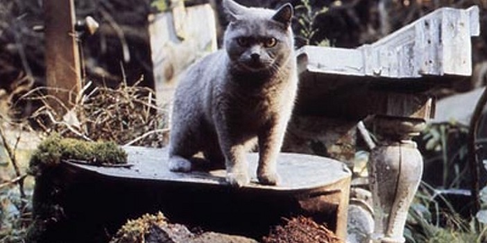 'Unearthed and Untold: The Path to Pet Sematary' Comes to Home Video