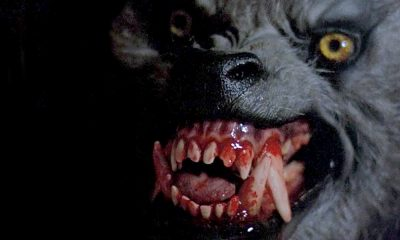 American Werewolf in London Snarl
