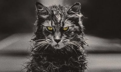 New 'Pet Sematary' Trailer Resurrects a Vicious Church the Cat