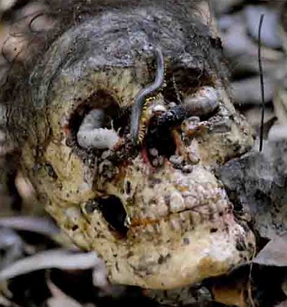 Cannibal Holocaust: Who Are The Real Cannibals?