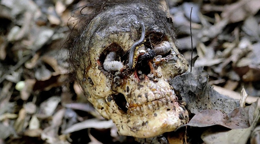 Cannibal Holocaust Rotted Skull