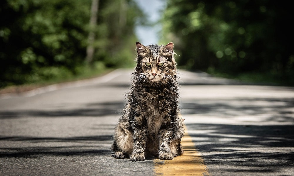 'Pet Sematary': New Origins Movie is in the Works for Paramount+
